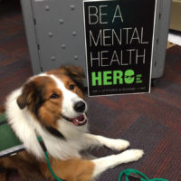 AKC Recognizes New AIR Therapy Dogs-Paws for Mind Program